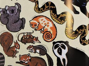 Zoologique, il. Joëlle Jolivet