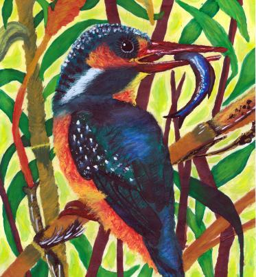 THE BIRDS OF BRAZIL AND SLOVAKIA